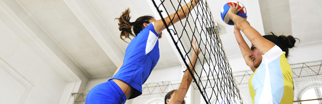 article_volley